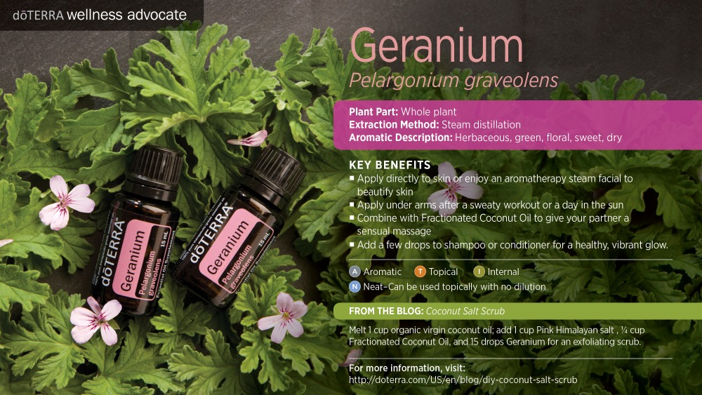 Pres Geranium by HoneyBreathe