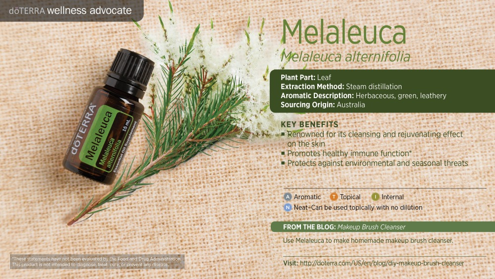 Pres Melaleuca by HoneyBreathe