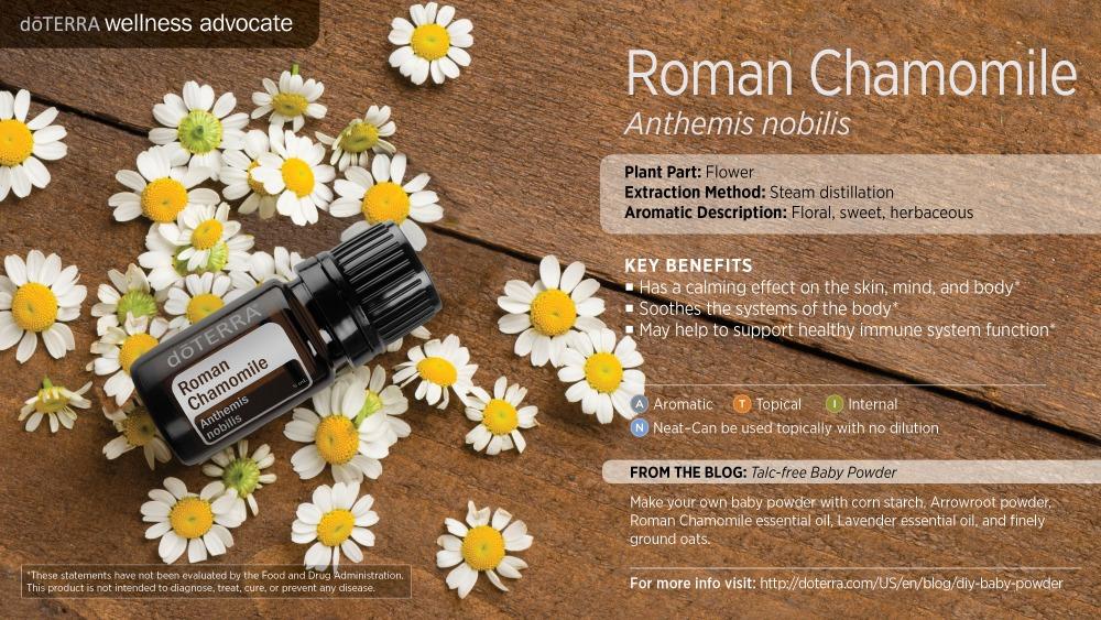 Pres Roman Chamomile by HoneyBreathe